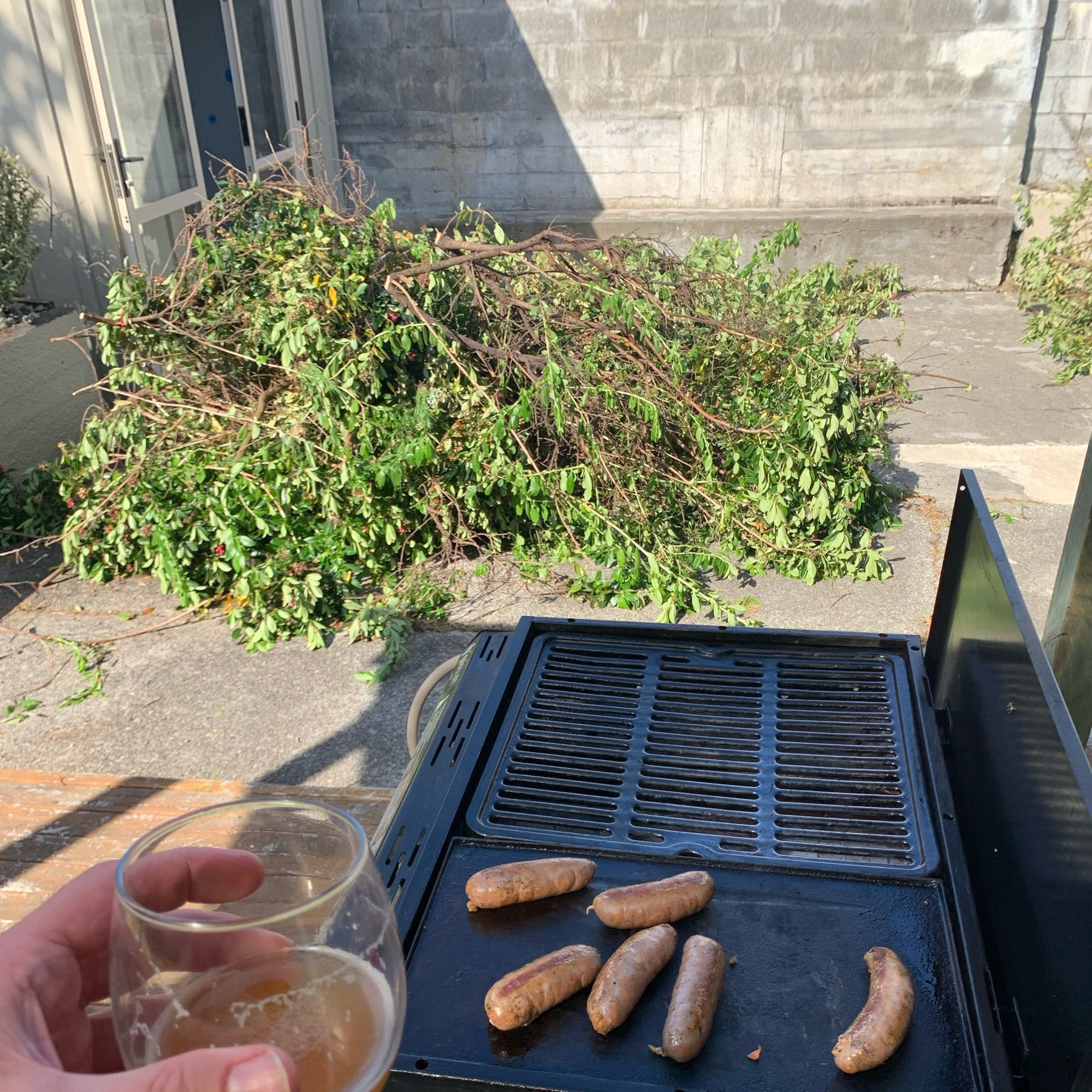 me hold a beer in front of sausages cooking on a barbeque. i. the background is a big pile of tree branches I cut through
