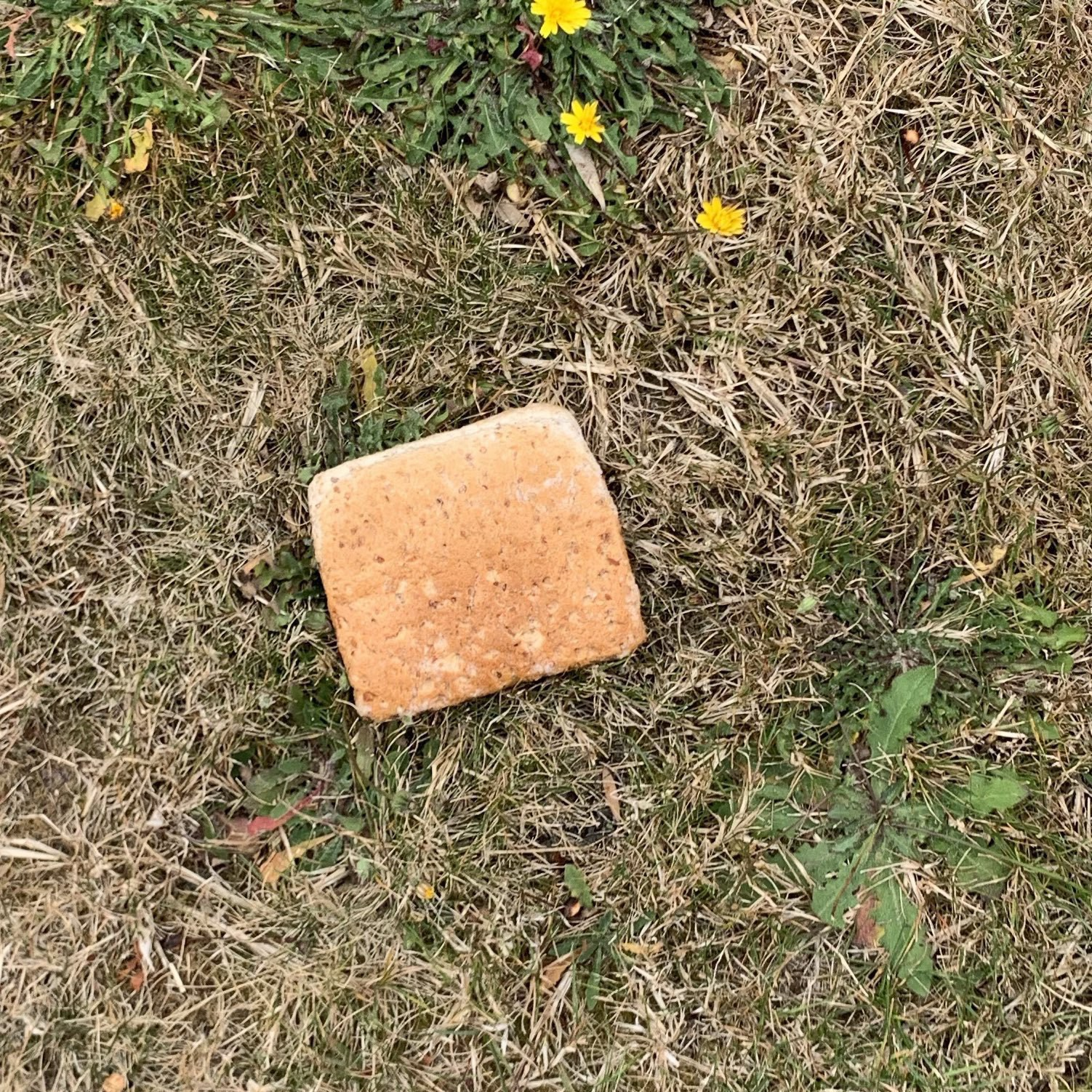 A slice of bread on the grass