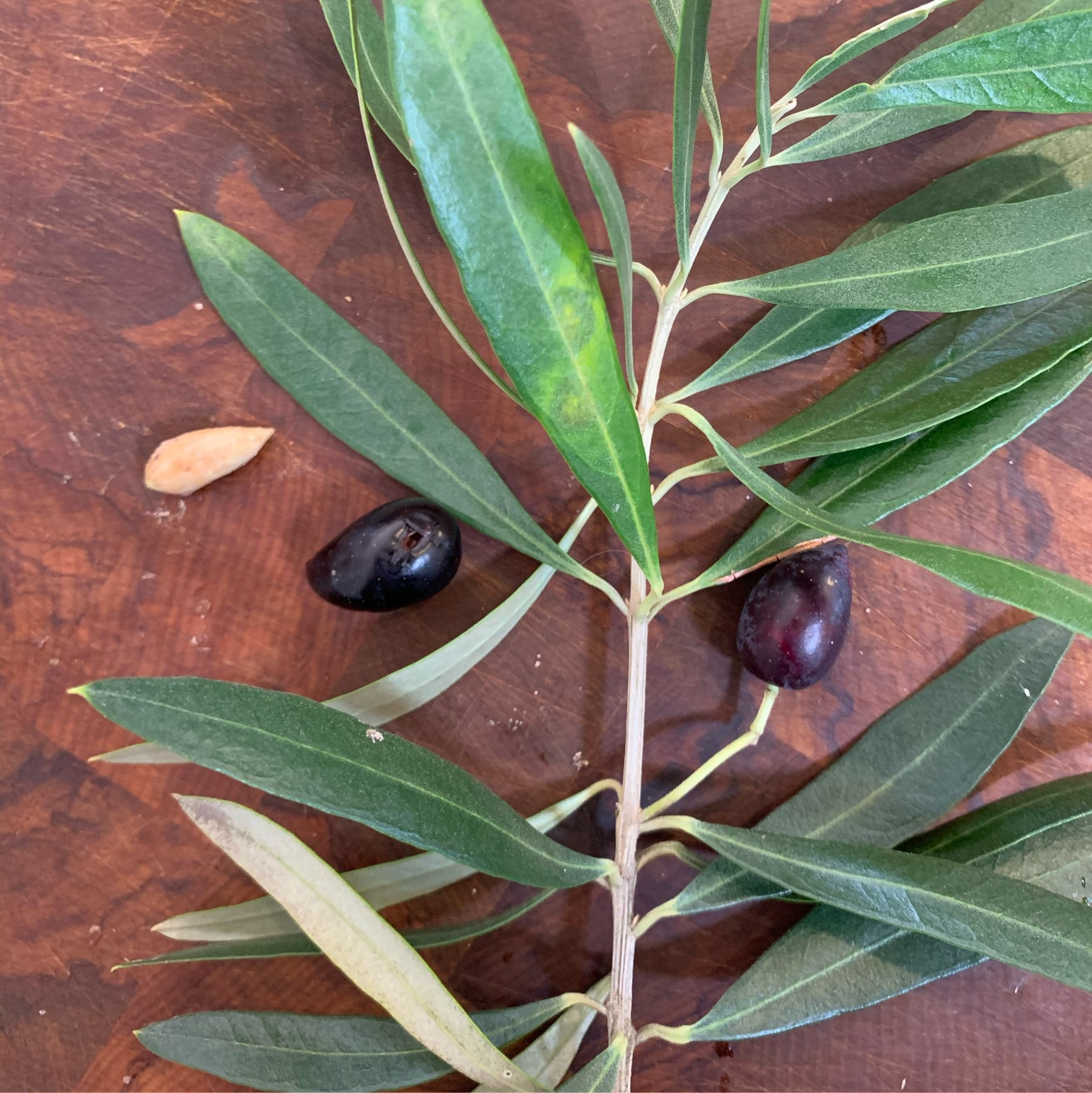 Are these what I think they are? (olives)
