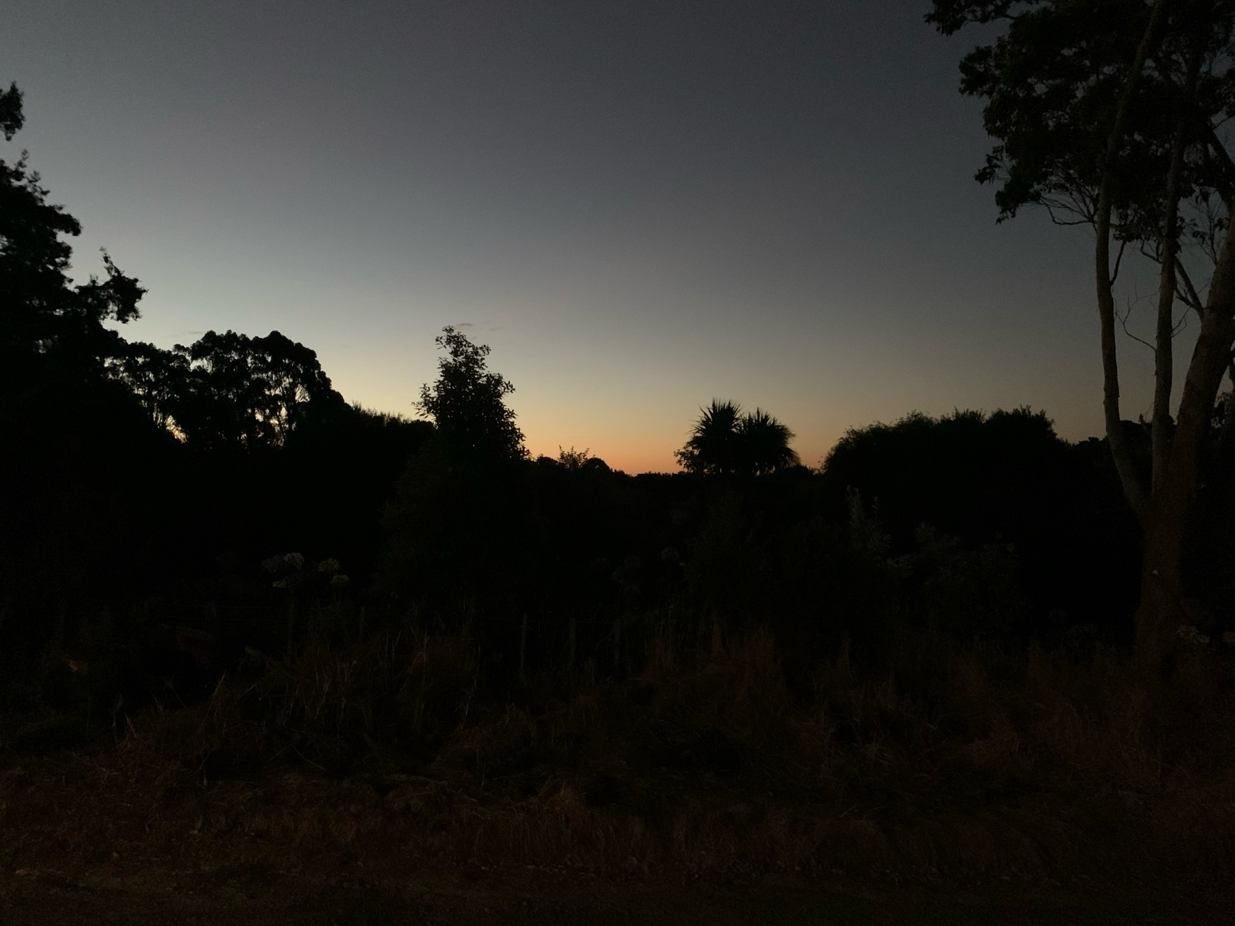A dusk sky with trees masking the full coloured sky visible in the background